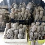 Speciale Cuma - Bottiglie custodite nel magazzino