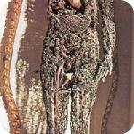 Macchine anatomiche - Cappella Sansevero
